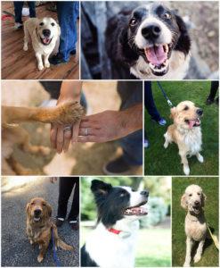 Collage of Puget Sound Pet Stop Hidden Dog Fence Collars