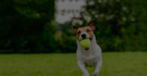 Dog playing in yard and running