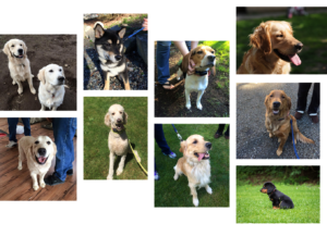 Collage of Different Dogs that Used Puget Sound Pet Stop